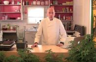 Making-A-Small-Batch-of-Medicinal-Grade-Cannabis-Oil-Revised-Edition